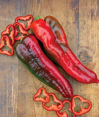 Pepper, Sweet, Thunderbolt Hybrid 1 Pkt. (20 seeds) Pepper Seeds, Sweet Pepper Seeds, Stuffing Peppers, Bell Peppers, Sweet Peppers, Bell Pepper Seeds
