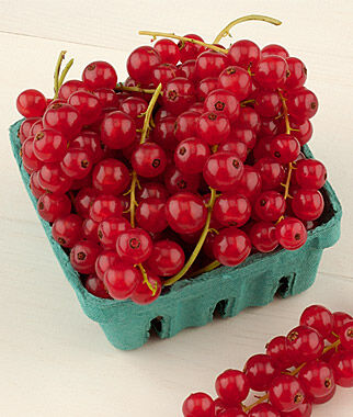 Currant, Rovada, Red, Late 1 Plant Berries, Berry Plants, Berry Garden, Gooseberry, Currant, Honeyberry, Jostaberry, Goji Berry, Berry