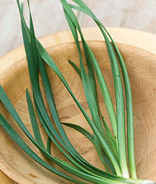 Chives, Allion 1 Pkt. (100 seeds) Chives, Garlic Chives, Chive plants, Chive Seeds, Herbs, Herb Seeds, Garden Seeds, Vegetable Seeds
