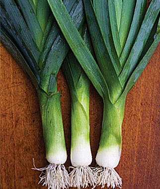 Leek, Lancelot 72 Seedlings Leek Seed, Leek Seeds, Leeks Seed, Leek, Leeks, Garden Leeks, Garden Seeds, Vegetable Seeds
