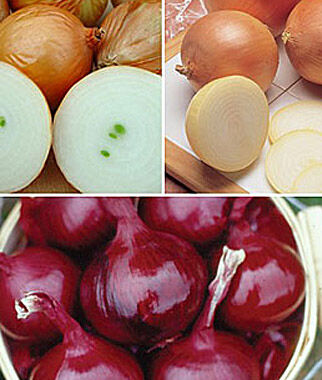 Onion, Mixed Plants Collection 144 seedlings Onion Seeds, Onion Sets, Onion Plants, Scallion Seeds, Bunching Onions, Green Onions, Garden Seeds