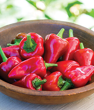 Pepper, Hot, Diablito 3 Plants Hot Pepper Seeds, Chili Pepper Seeds, Chili Seeds, Pepper Seeds, Peppers, Chilis, Garden Seeds, Seed