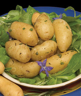 Potato, Swedish Peanut Fingerling, , large