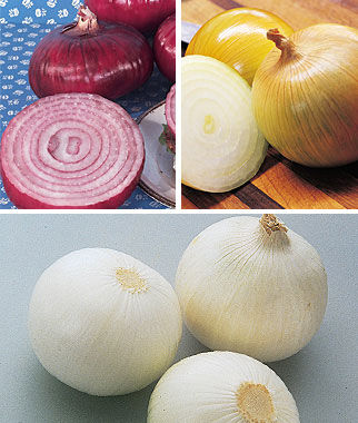 Onion, Burpee's Sweet Onion Plants, , large