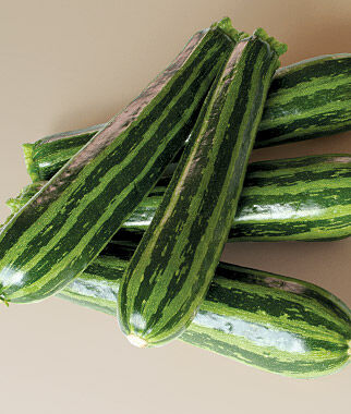 Squash, Summer Green Tiger Zucchini Hybrid, , large