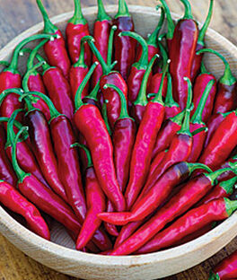 Pepper, Hot, Dragon Cayenne, , large