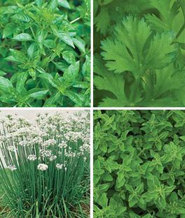 Four Fabulous Herbs, , large