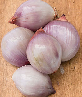 Shallot, Ambition Hybrid, , large