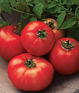 Tomato, Carmelita Hybrid 1 Pkt. (25 seeds), Tomatoes, Tomato Seeds, Beefsteak Tomatoes, Slicing Tomatoes, Tomato Starts, Tomato Plants
