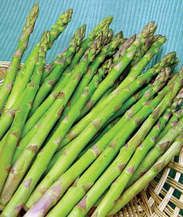 Asparagus, Jersey Knight, , large