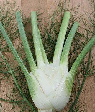 Fennel, Orion Hybrid, , large