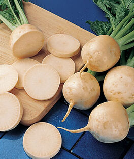 Turnip, Golden Globe Organic, , large