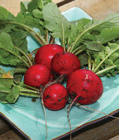 Radish, Early Scarlet Globe, , large