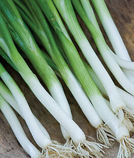 Bunching Onion, Parade , , large