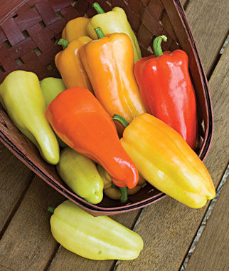 Sweet Gypsy Hybrid Pepper Seeds And Plants Vegetable