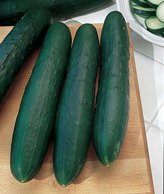Cucumber, Marketmore 76, , large