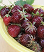 Strawberry, Purple Wonder ™ , , large