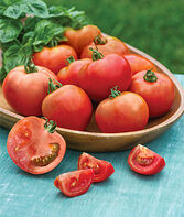Tomato, Summer Girl Hybrid, , large