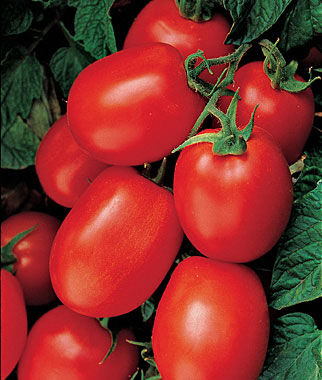 Tomato, Health Kick Hybrid, , large