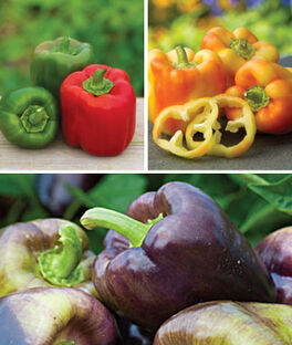 Sweet Pepper Plants Collection, , large
