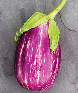 Eggplant, Shooting Stars , , large