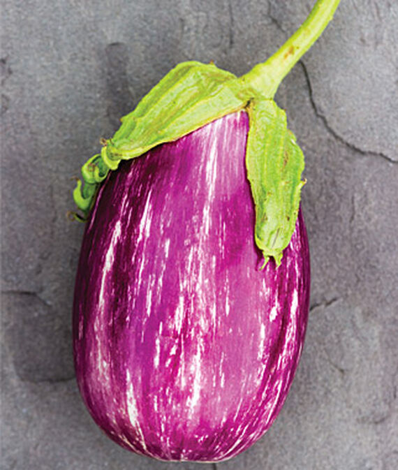 Eggplant, Shooting Stars