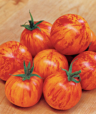 Tomato, Red Lightning Hybrid, , large