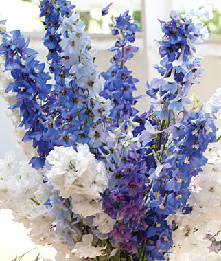 Delphinium, Fordhook Cottage Garden Mix, , large