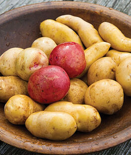 Potato, Heirloom Collection, , large