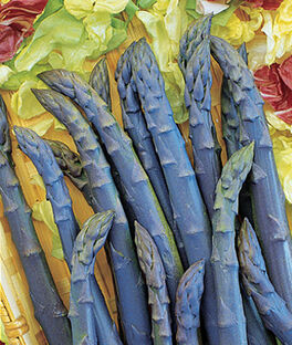 Asparagus, Pacific Purple, , large