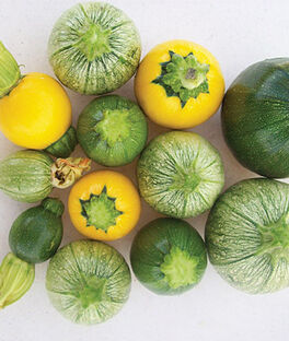 Squash, Zucchini, Ball Hybrid Mix, , large