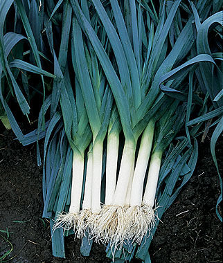 Leek, Blue Solaise, , large
