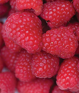Raspberry, Killarney, , large