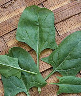 Spinach, Indian Summer Hybrid , , large