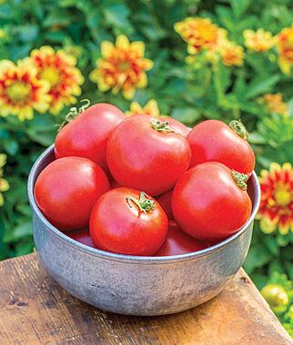 Tomato, Cloudy Day Hybrid 1 Pkt. (25 Seeds) Tomato Seeds, Early Tomatoes, Early Tomato Seeds, Tomato Plants, Short Season Tomatoes, Garden Seeds