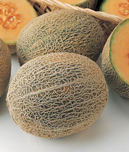 Cantaloupe, Honey Bun Hybrid, , large