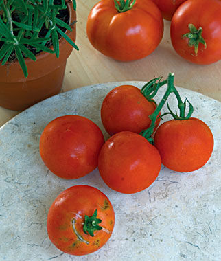Tomato, Fourth Of July Hybrid, , large