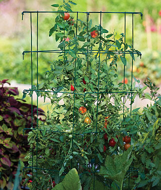 Get better yields and save space in your garden with our selection