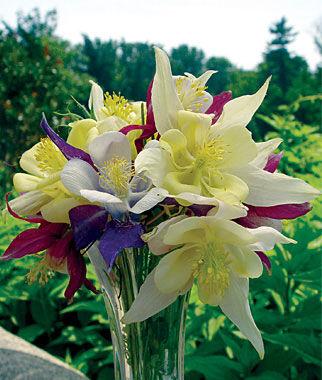 shade perennials, Natural flower
