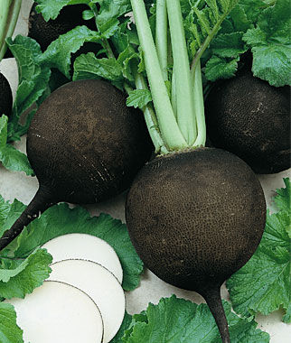 Radish, Black Spanish Round, , large