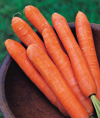 Carrot, Nantes Half Long, , large