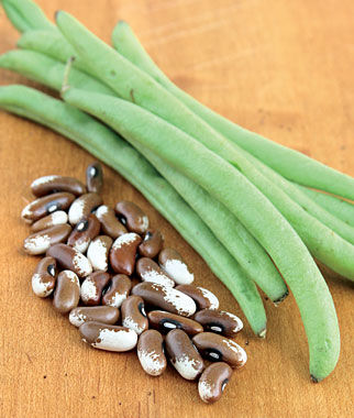 Bean, Painted Pony 1 Pkt. (1 oz.) Bean Seeds, Bush Beans, Beans - Bush, Bush Bean Seeds, Vegetable Seeds, Garden Seeds, Vegetable Seed