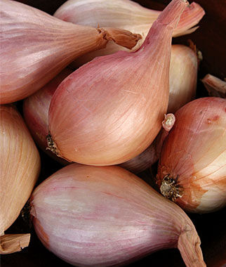 Shallots, French Red, , large