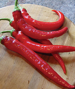 Pepper, Hot Large Red Cayenne, , large