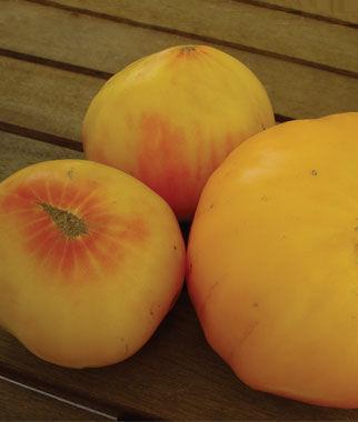 Tomato, Hillbilly, Regular Leaf 1 Pkt. (30 Seeds) Tomatoes, Tomato Seeds, Beefsteak Tomatoes, Slicing Tomatoes, Tomato Starts, Tomato Plants