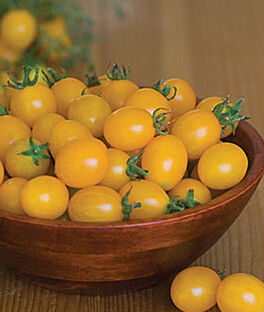 Tomato, Lemon Drop , , large