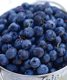 Blueberry, Coville, , large
