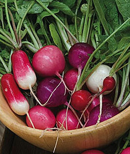 Radish, Cook's Custom Blend, , large