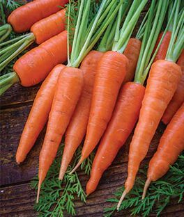 Carrot, Danvers 126 Half Long Organic, , large
