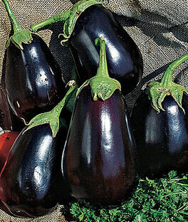 Eggplant, Black Beauty, , large